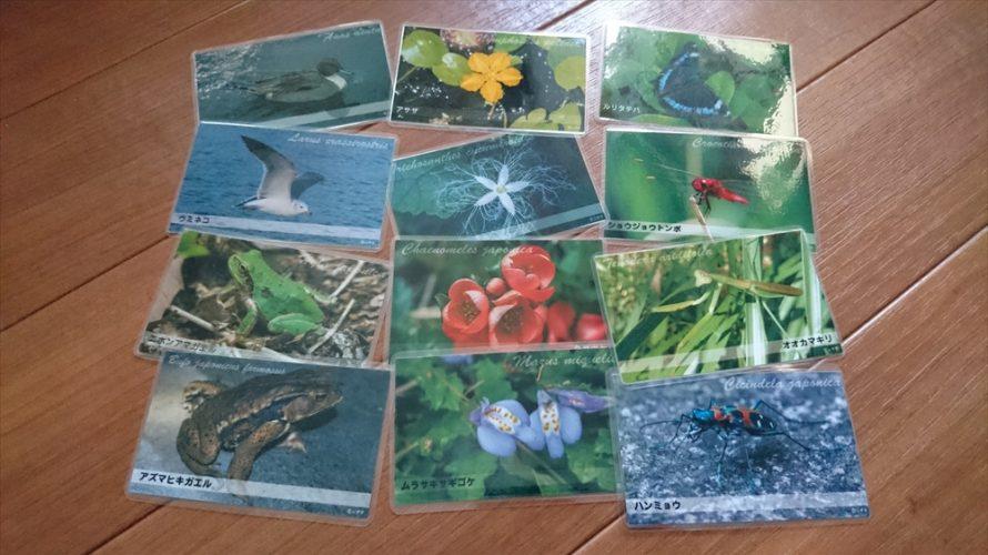 子供達に人気の生き物カード図鑑